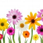 wild flower banner
