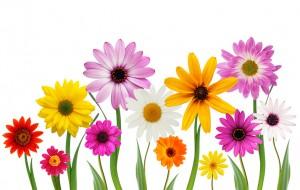 wild flower banner jpeg